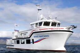 Escursioni in barca in Islanda