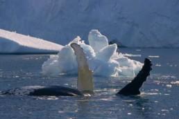 navigazione_nello_isole_svalbard_circumnavigazione_nello_spitsbergen