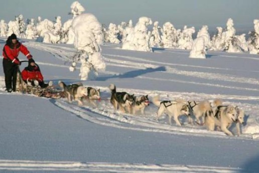 Safari con i cani da slitta