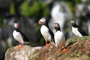 Viaggio Islanda Groenlandia e Isole Faroe con Agamatour