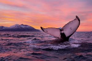 Risultati immagini per balene