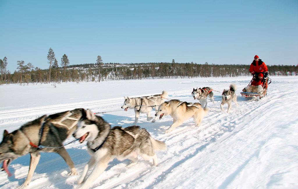huskies-18