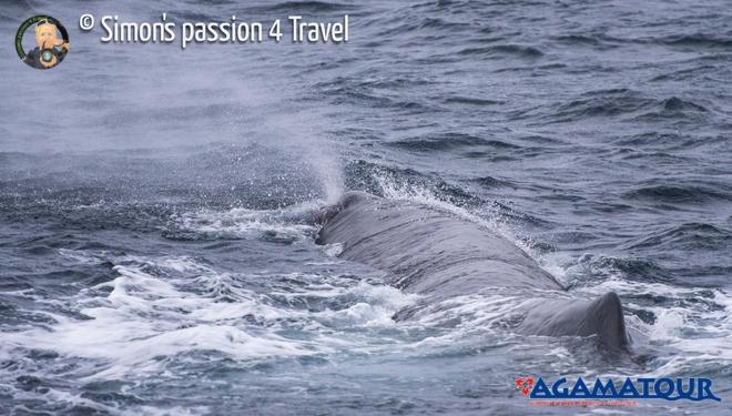 balene-isole-lofoten