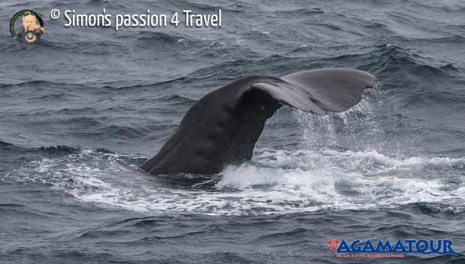 balene-lofoten